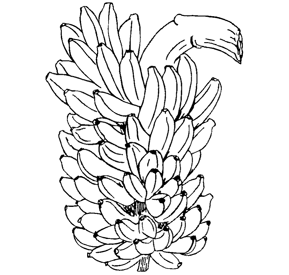 banana bunch coloring page - photo #35